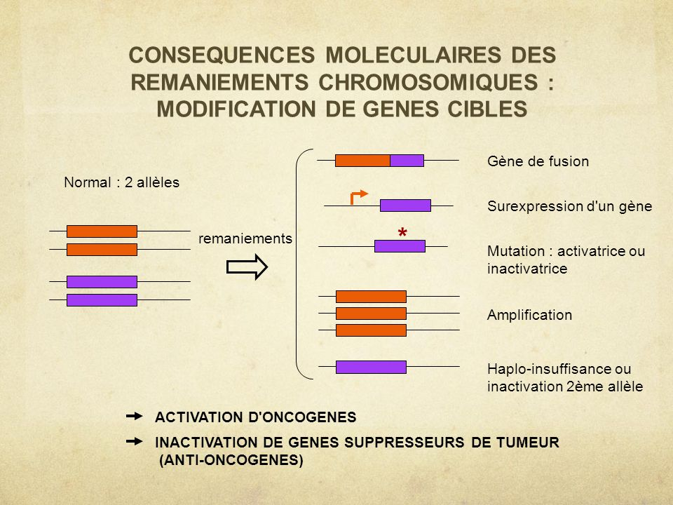 CONSEQUENCES MOLECULAIRES DES REMANIEMENTS CHROMOSOMIQUES : MODIFICATION DE GENES CIBLES