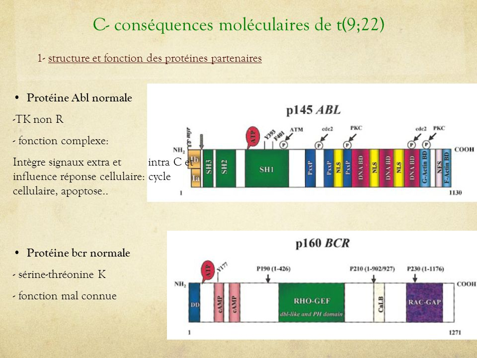 C- conséquences moléculaires de t(9;22)