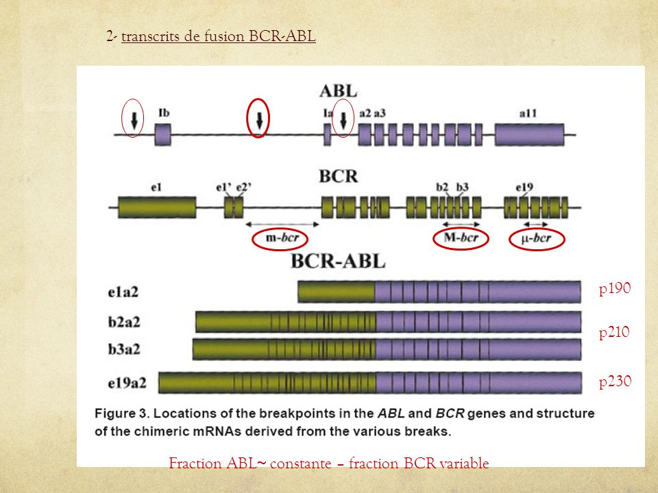 Fraction ABL constante – fraction BCR variable