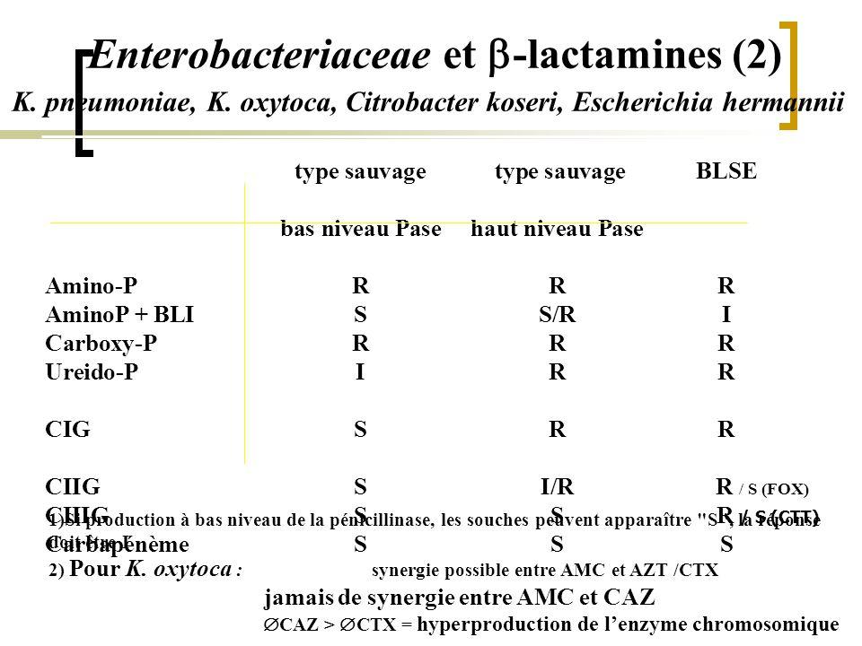 Enterobacteriaceae et b-lactamines (2)