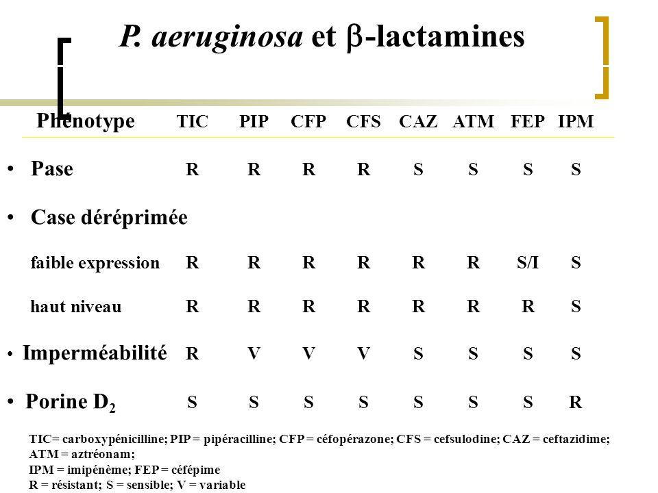 P. aeruginosa et b-lactamines