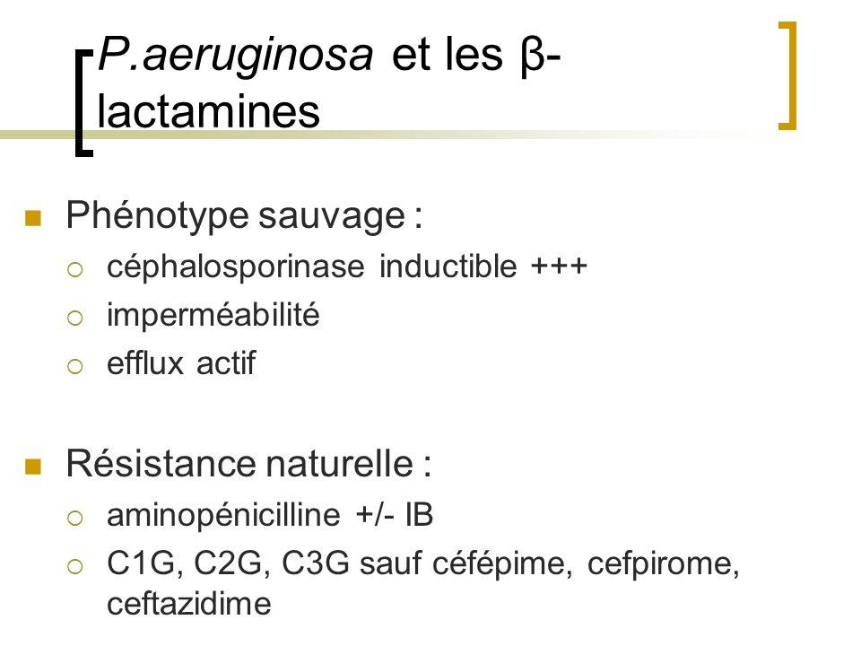 P.aeruginosa et les β-lactamines