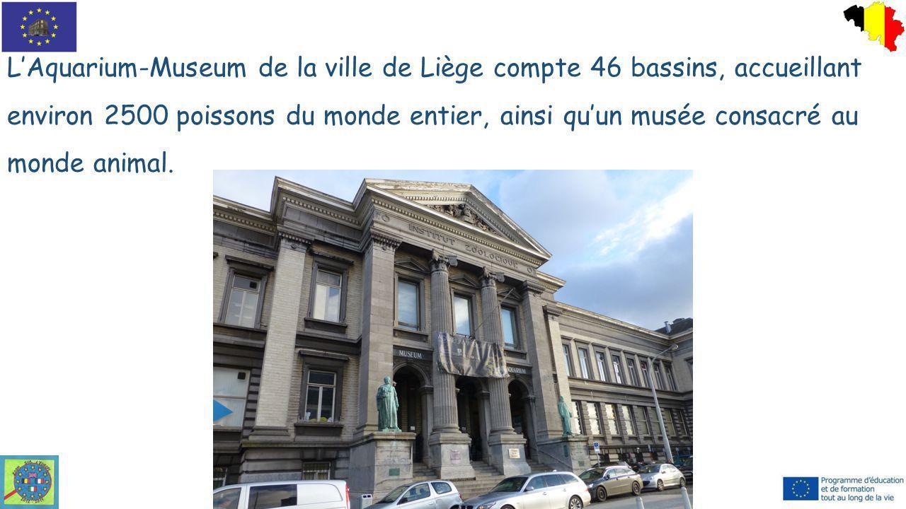 L'Aquarium-Museum de la ville de Liège compte 46 bassins, accueillant environ 2500 poissons du monde entier, ainsi qu'un musée consacré au monde animal.