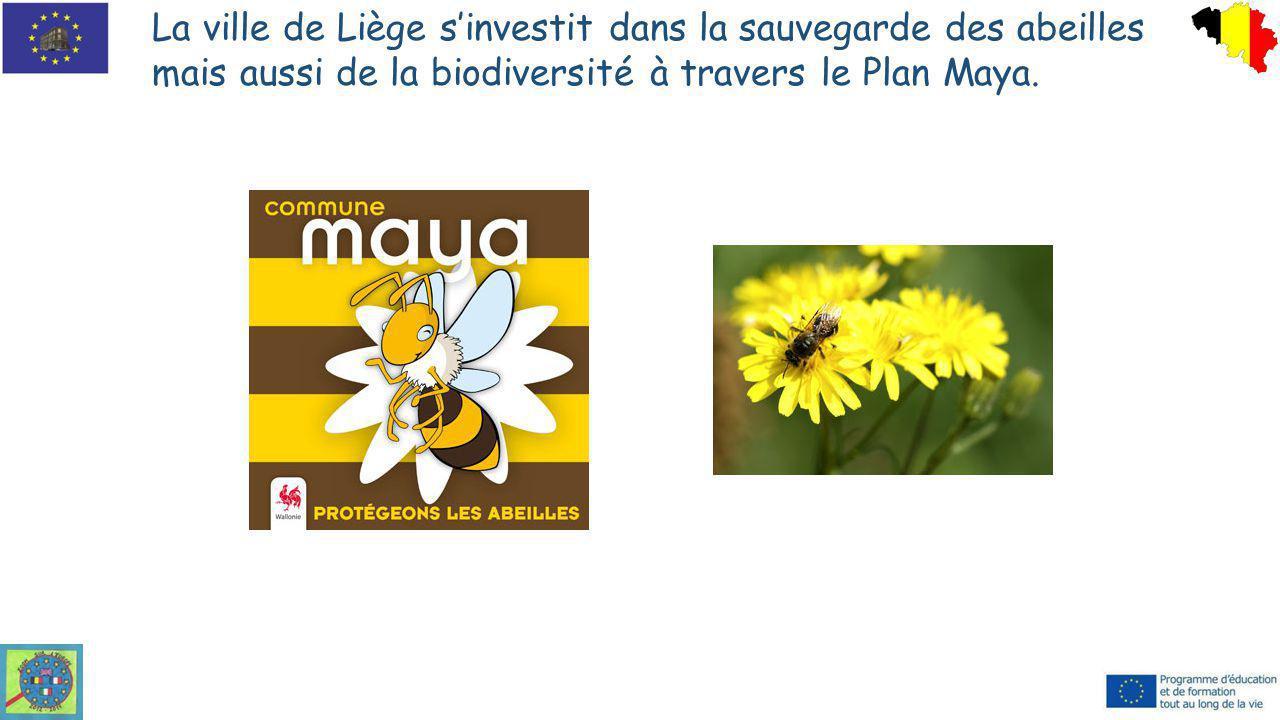 La ville de Liège s'investit dans la sauvegarde des abeilles mais aussi de la biodiversité à travers le Plan Maya.