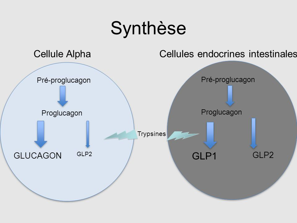 Synthèse Cellule Alpha Cellules endocrines intestinales GLP1 GLUCAGON