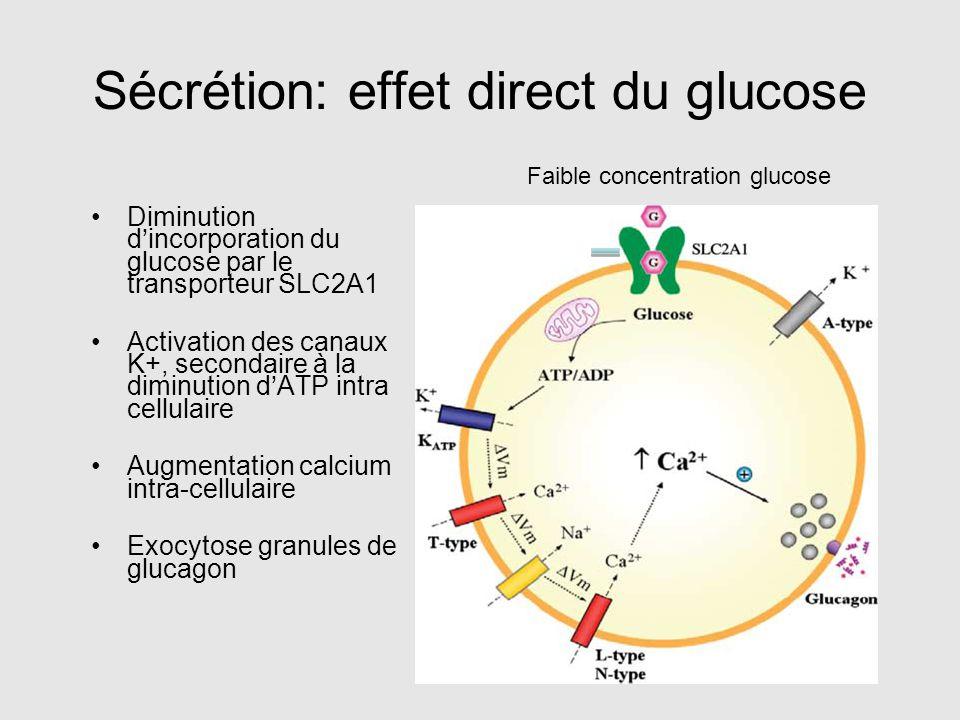 Sécrétion: effet direct du glucose