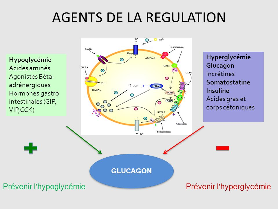 AGENTS DE LA REGULATION