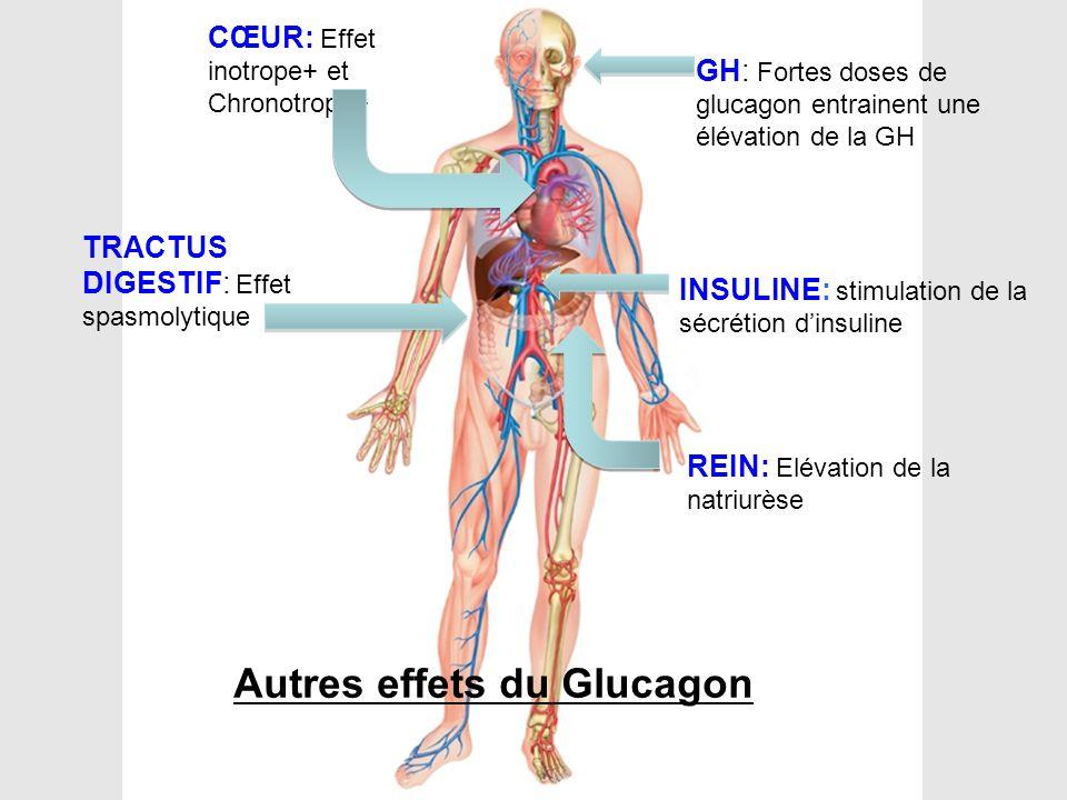 Autres effets du Glucagon