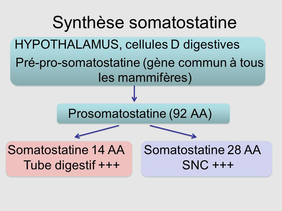 Synthèse somatostatine