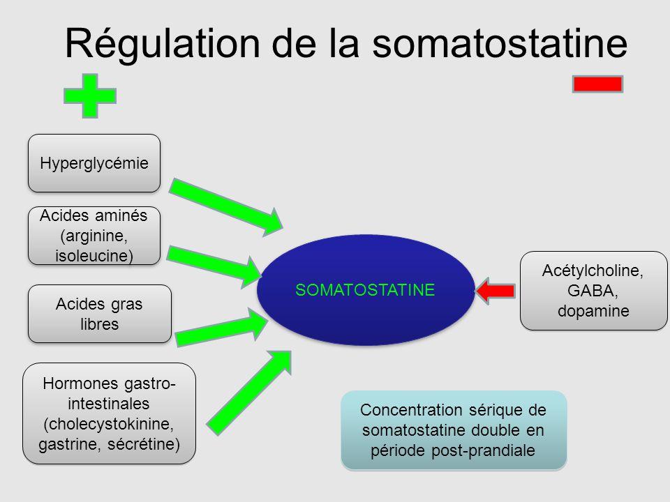 Régulation de la somatostatine
