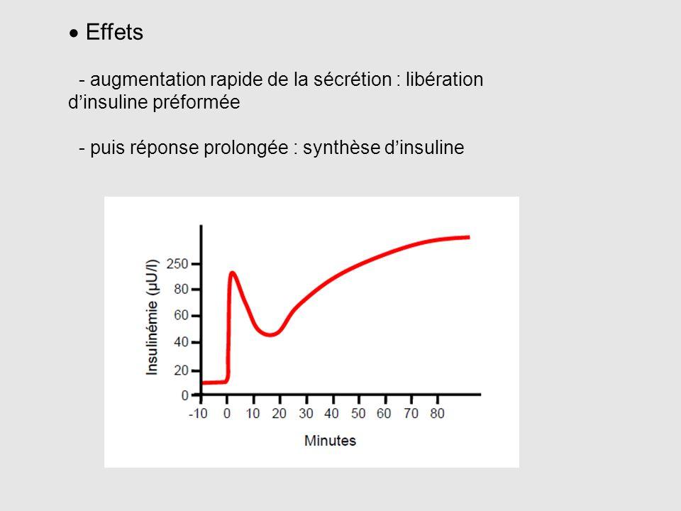 Effets - augmentation rapide de la sécrétion : libération d'insuline préformée.