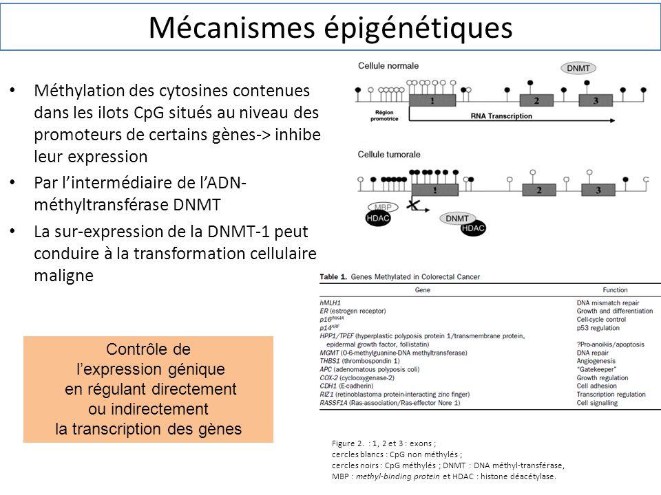 Mécanismes épigénétiques