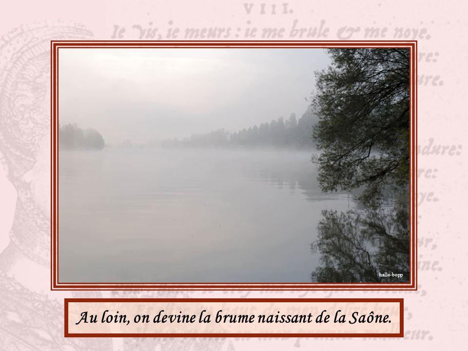 Au loin, on devine la brume naissant de la Saône.
