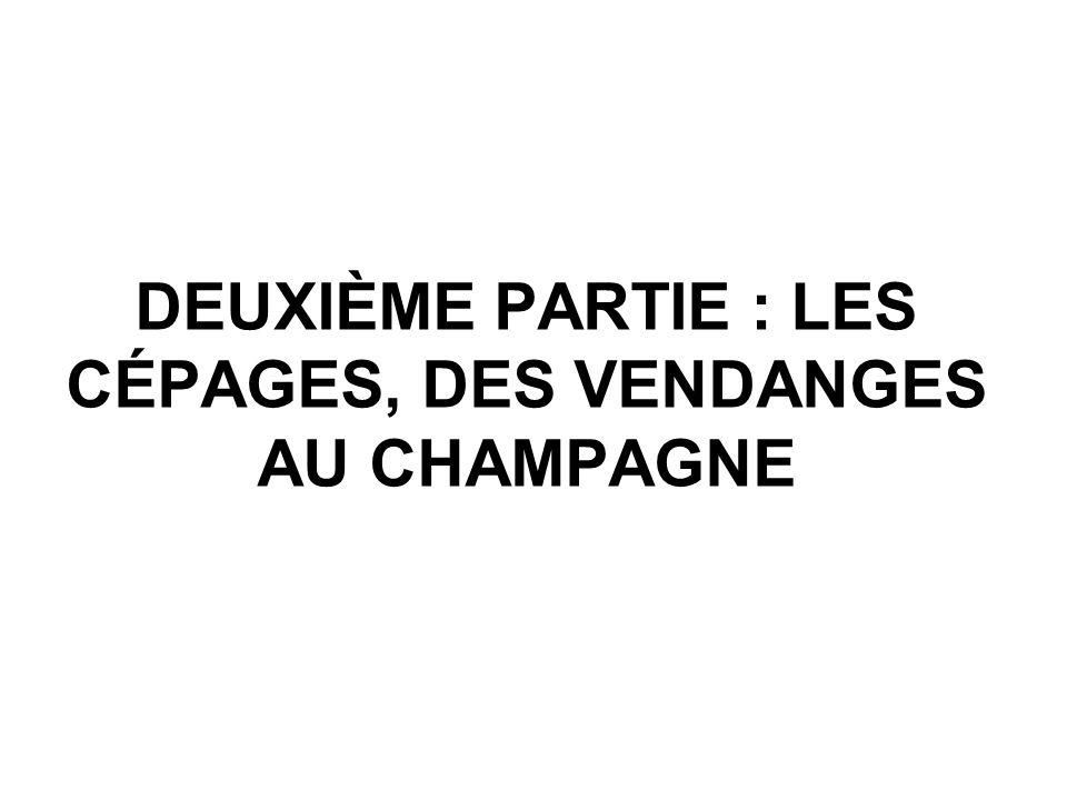 DEUXIÈME PARTIE : LES CÉPAGES, DES VENDANGES AU CHAMPAGNE