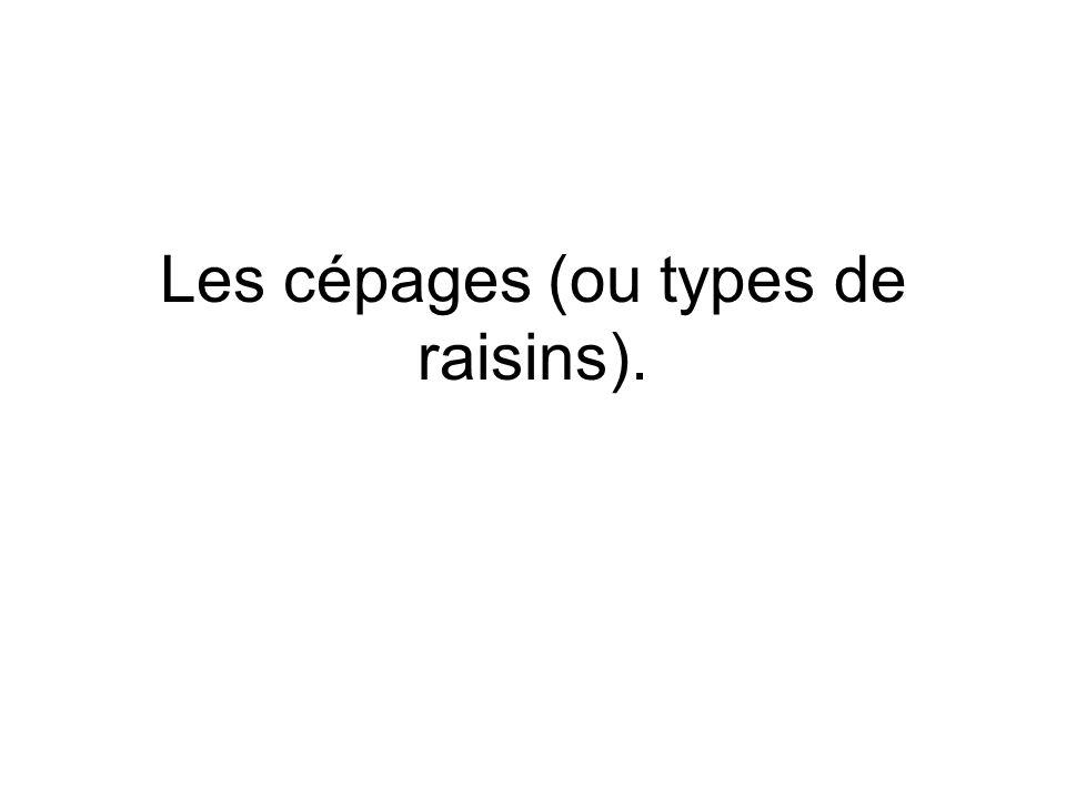 Les cépages (ou types de raisins).