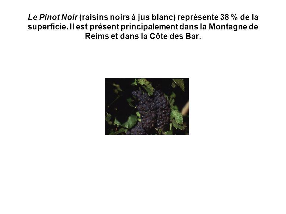 Le Pinot Noir (raisins noirs à jus blanc) représente 38 % de la superficie.