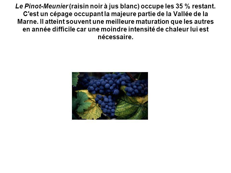 Le Pinot-Meunier (raisin noir à jus blanc) occupe les 35 % restant