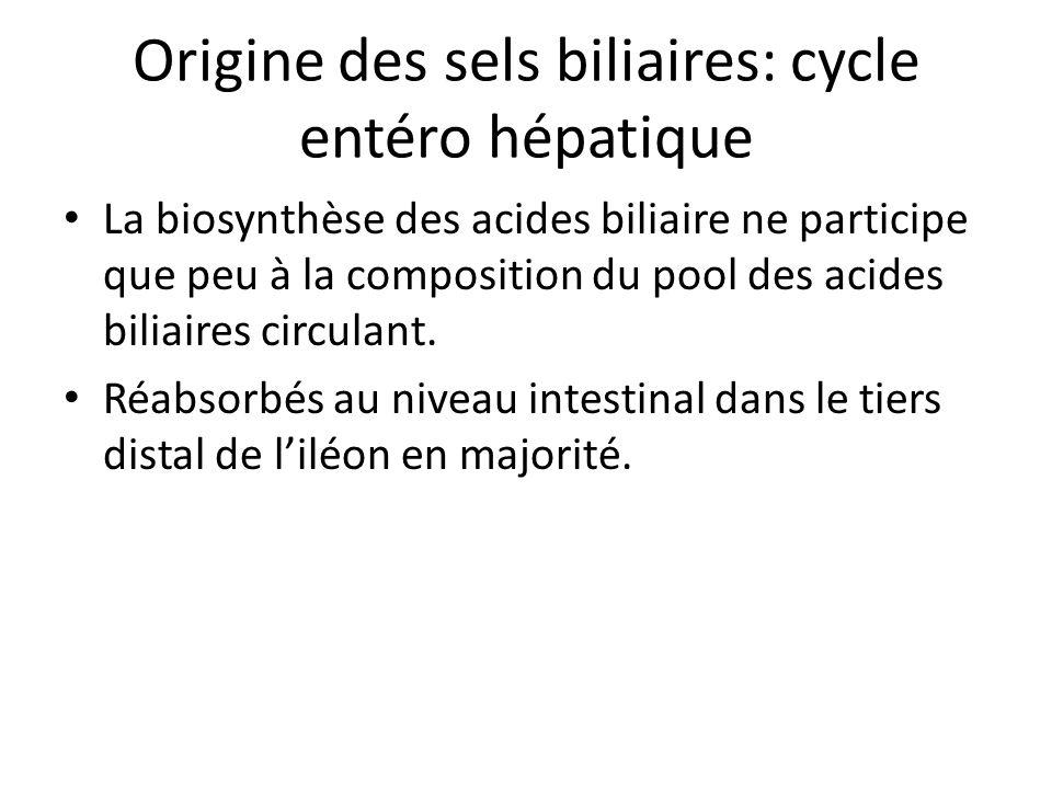 Origine des sels biliaires: cycle entéro hépatique