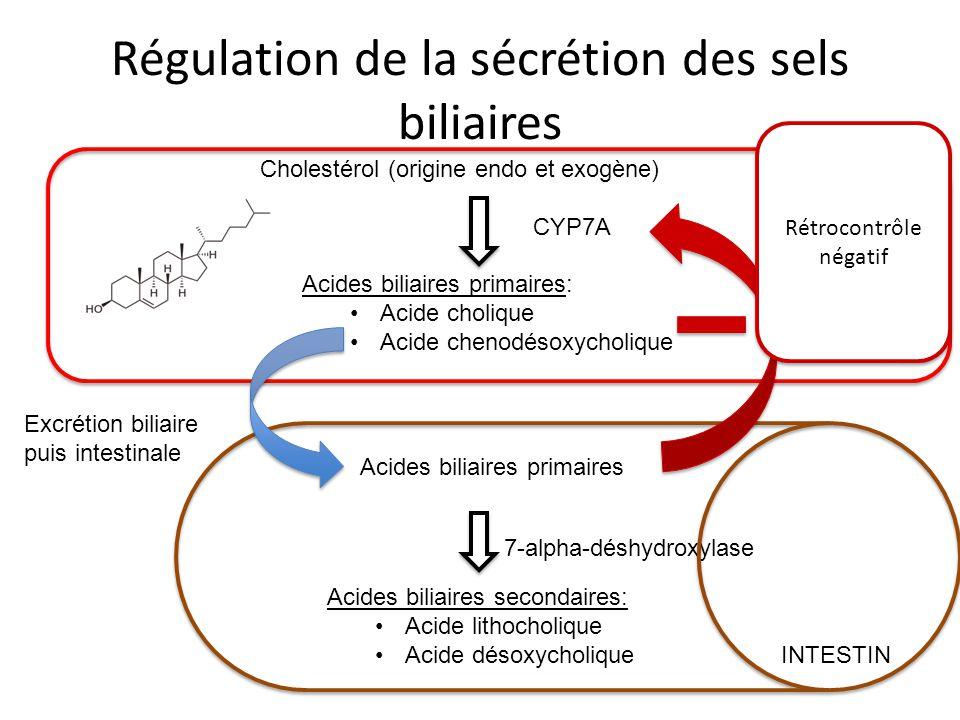 Régulation de la sécrétion des sels biliaires