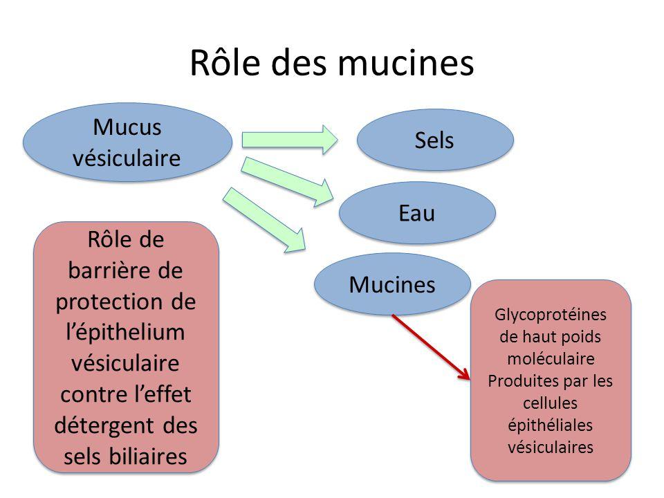 Rôle des mucines Mucus vésiculaire Sels Eau