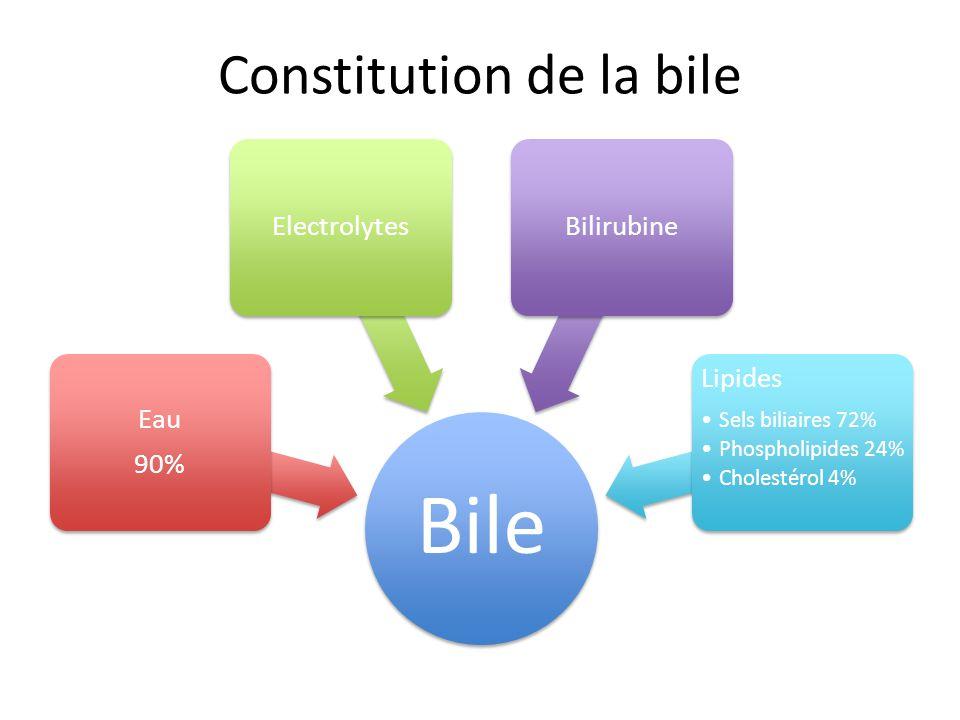 Constitution de la bile