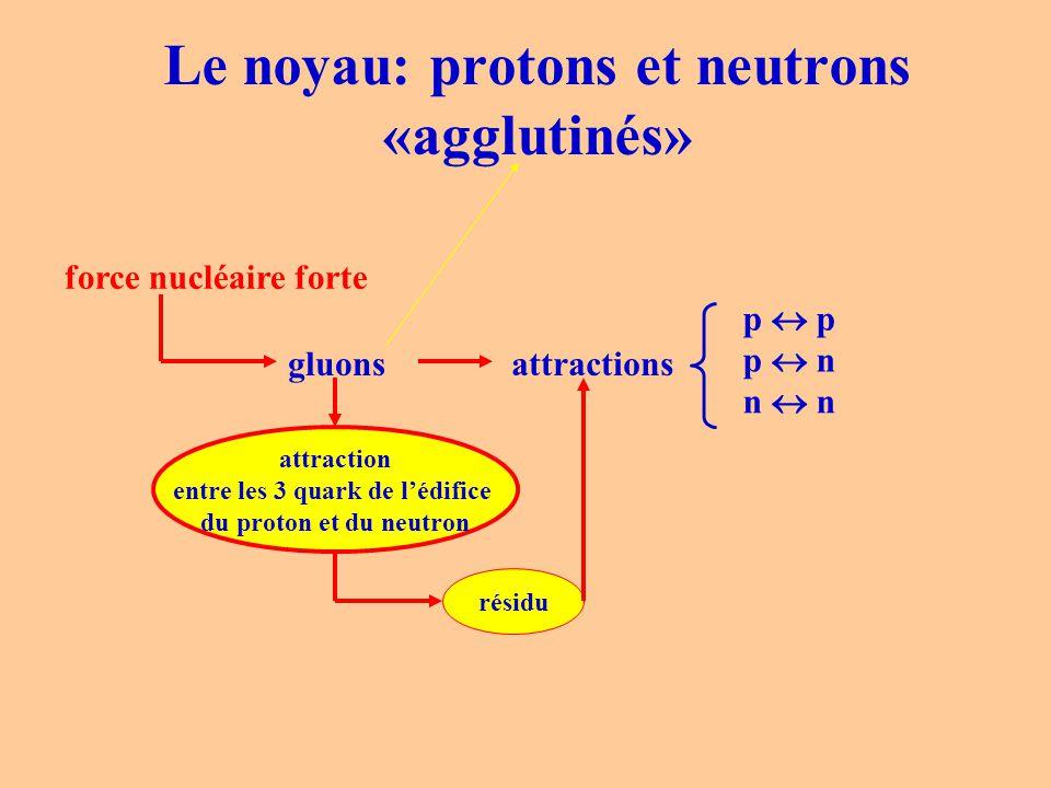 Le noyau: protons et neutrons «agglutinés»