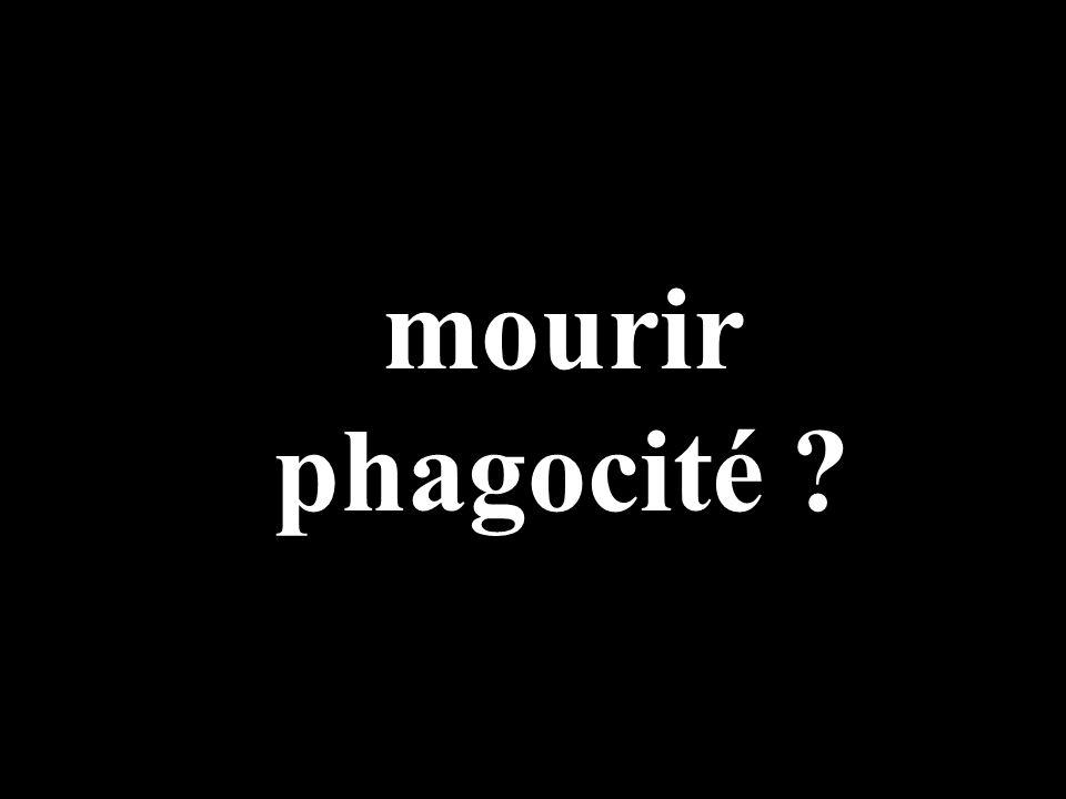 mourir phagocité