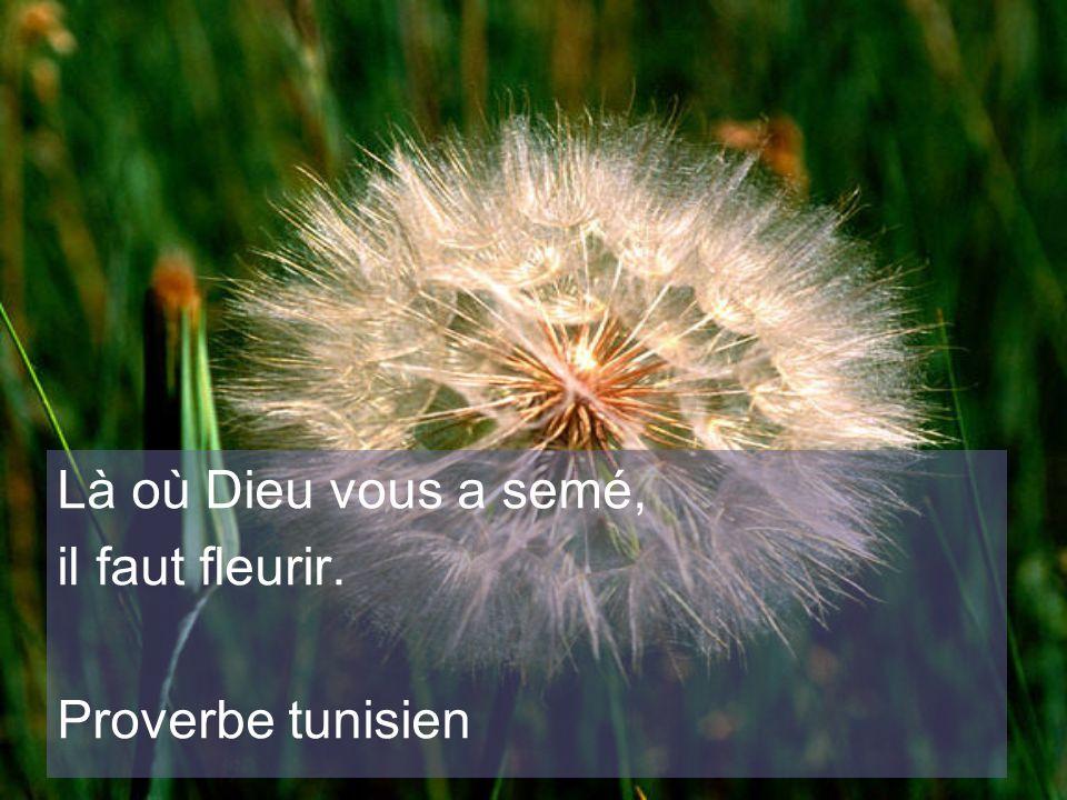 Là où Dieu vous a semé, il faut fleurir. Proverbe tunisien
