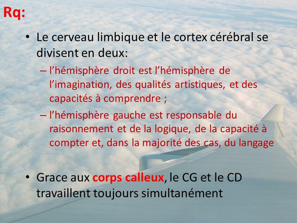 Rq: Le cerveau limbique et le cortex cérébral se divisent en deux: