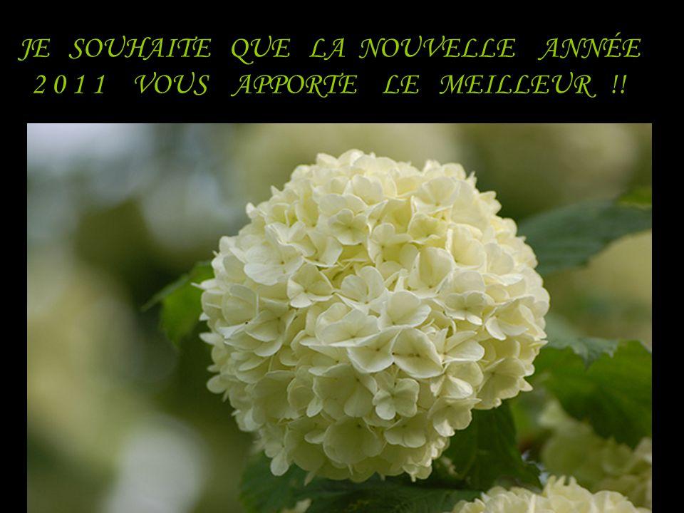 JE SOUHAITE QUE LA NOUVELLE ANNÉE 2 0 1 1 VOUS APPORTE LE MEILLEUR !!