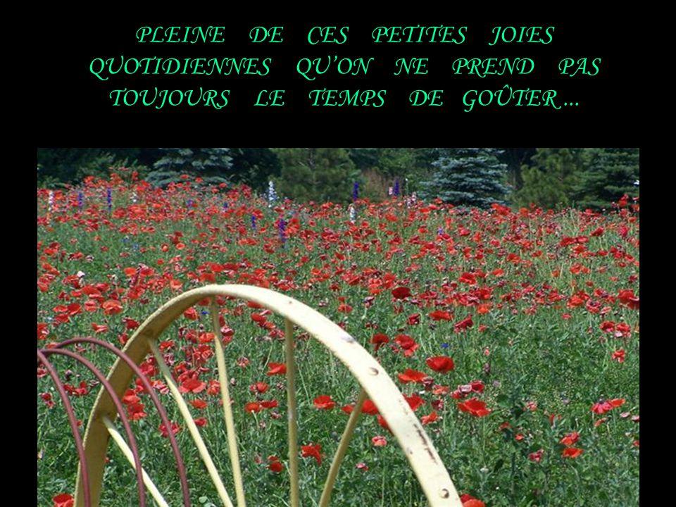 PLEINE DE CES PETITES JOIES QUOTIDIENNES QU'ON NE PREND PAS TOUJOURS LE TEMPS DE GOÛTER ...
