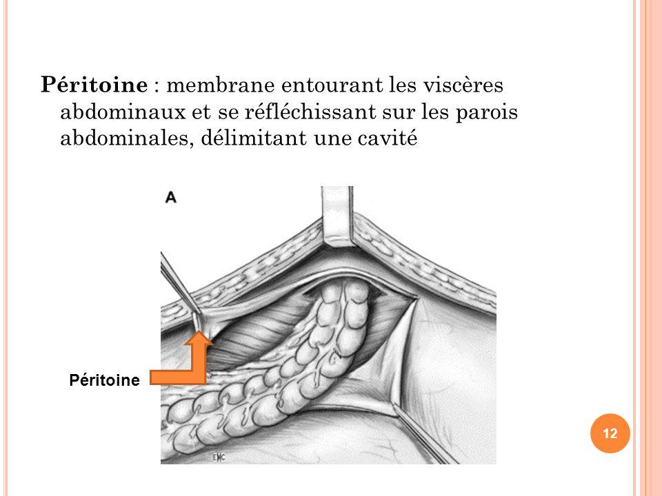 Péritoine : membrane entourant les viscères abdominaux et se réfléchissant sur les parois abdominales, délimitant une cavité