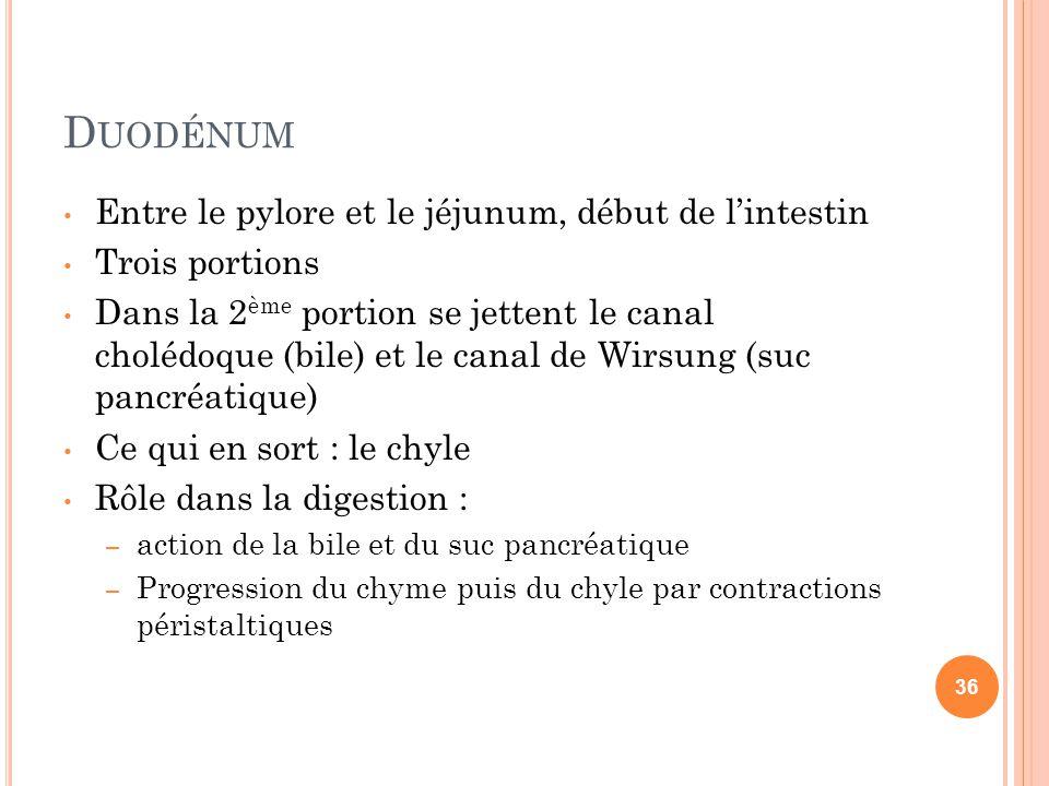 Duodénum Entre le pylore et le jéjunum, début de l'intestin