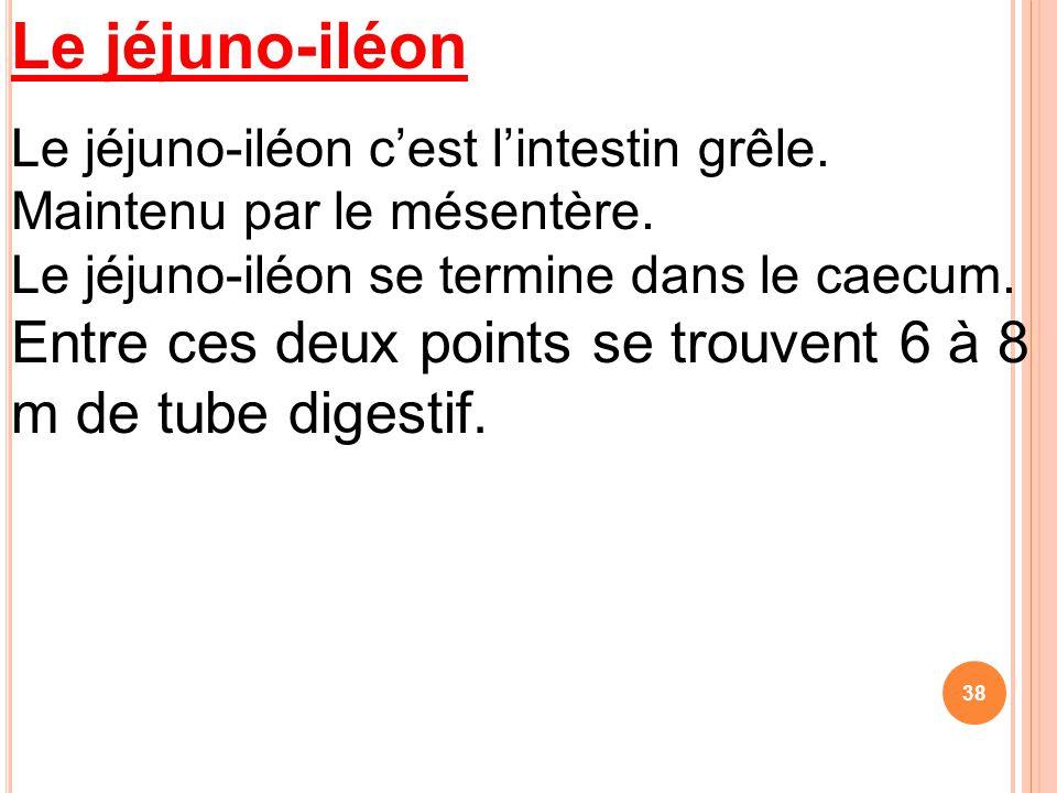 Le jéjuno-iléon Le jéjuno-iléon c'est l'intestin grêle.