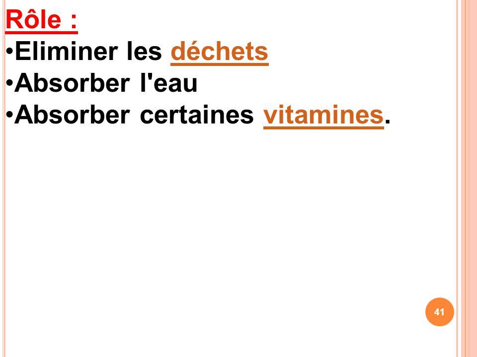 Rôle : Eliminer les déchets Absorber l eau Absorber certaines vitamines.