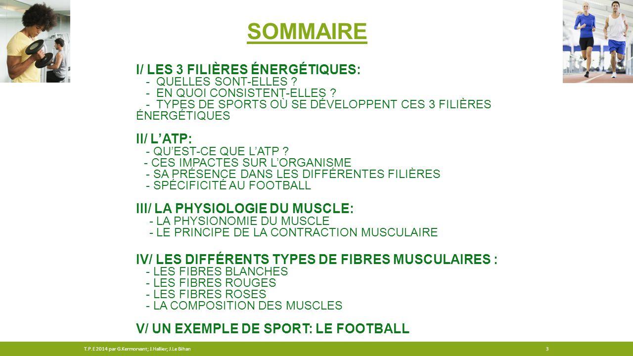 Sommaire I/ Les 3 filières énergétiques: II/ l'ATP: