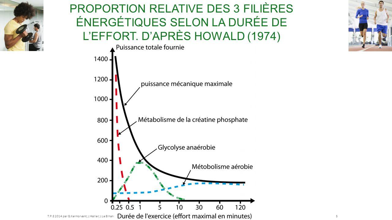 Proportion relative des 3 filières énergétiques selon la durée de l'effort. D'après Howald (1974)