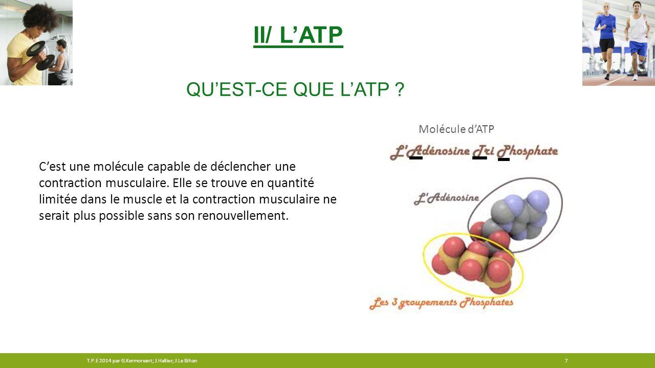 II/ L'ATP Qu'est-ce que l'ATP