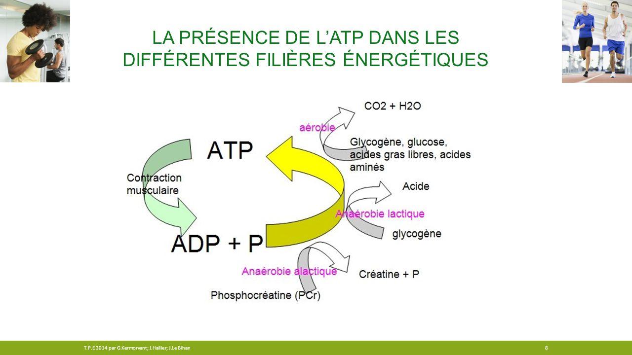 La présence de l'ATP dans les différentes filières énergétiques