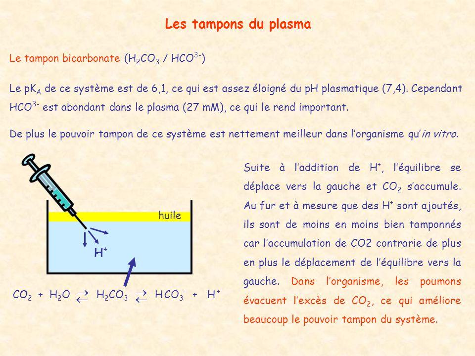  Les tampons du plasma H+ Le tampon bicarbonate (H2CO3 / HCO3-)