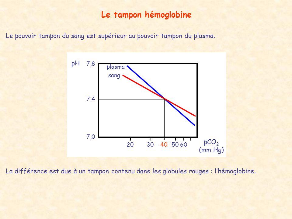 Le tampon hémoglobine Le pouvoir tampon du sang est supérieur au pouvoir tampon du plasma. plasma.