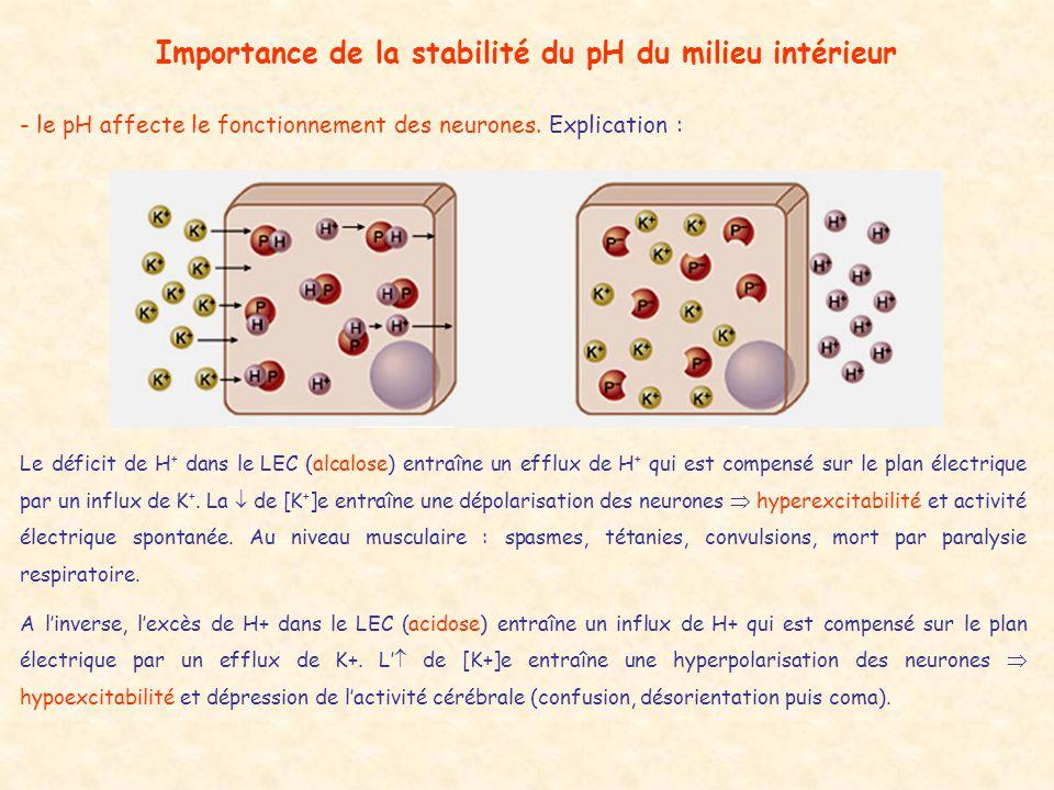 Importance de la stabilité du pH du milieu intérieur