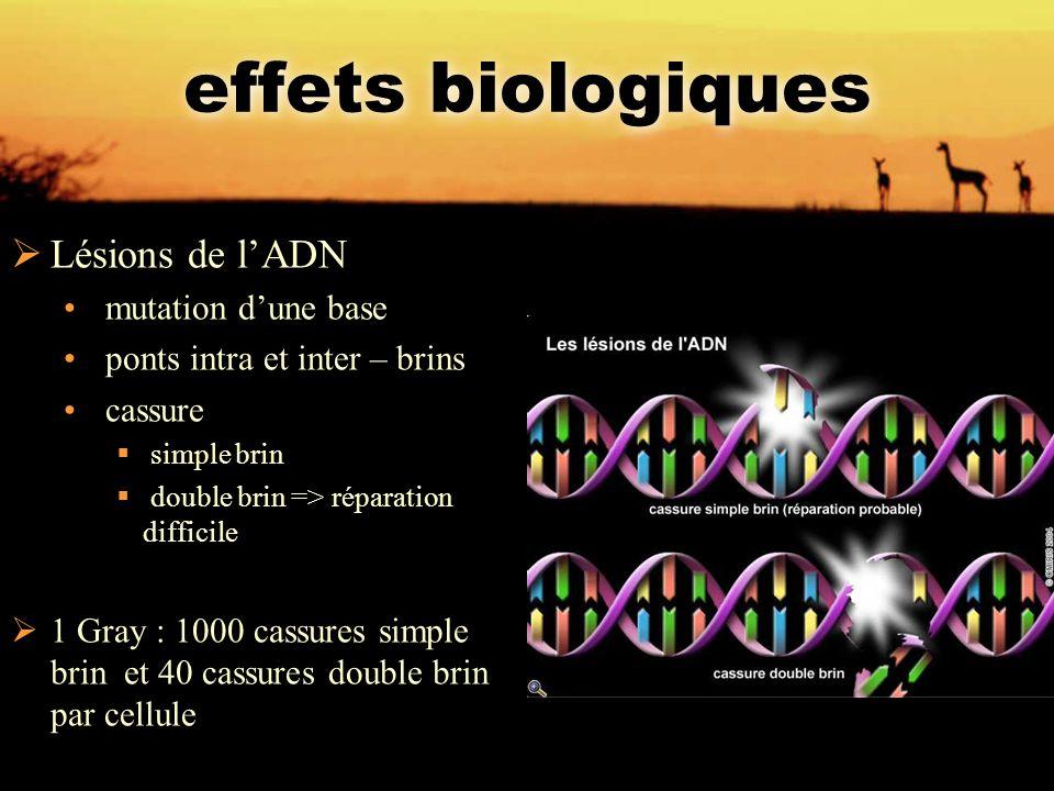 effets biologiques Lésions de l'ADN mutation d'une base