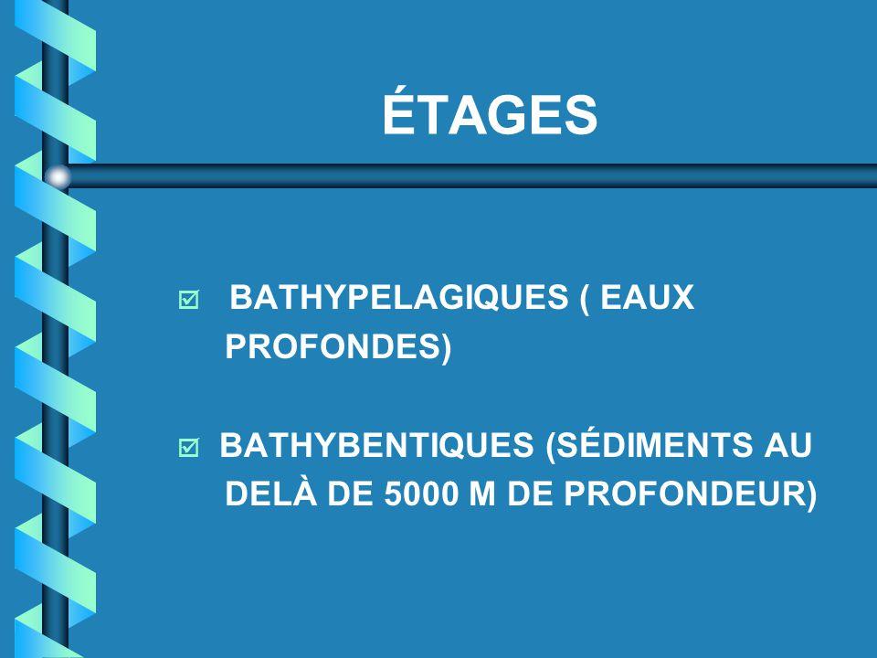 ÉTAGES BATHYPELAGIQUES ( EAUX PROFONDES) BATHYBENTIQUES (SÉDIMENTS AU