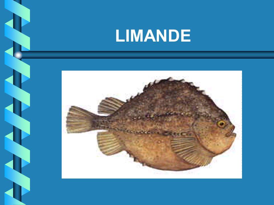 LIMANDE