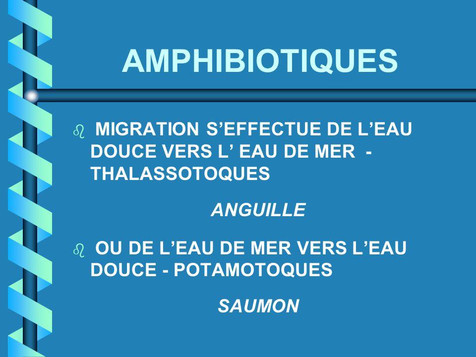 AMPHIBIOTIQUES MIGRATION S'EFFECTUE DE L'EAU DOUCE VERS L' EAU DE MER - THALASSOTOQUES. ANGUILLE.