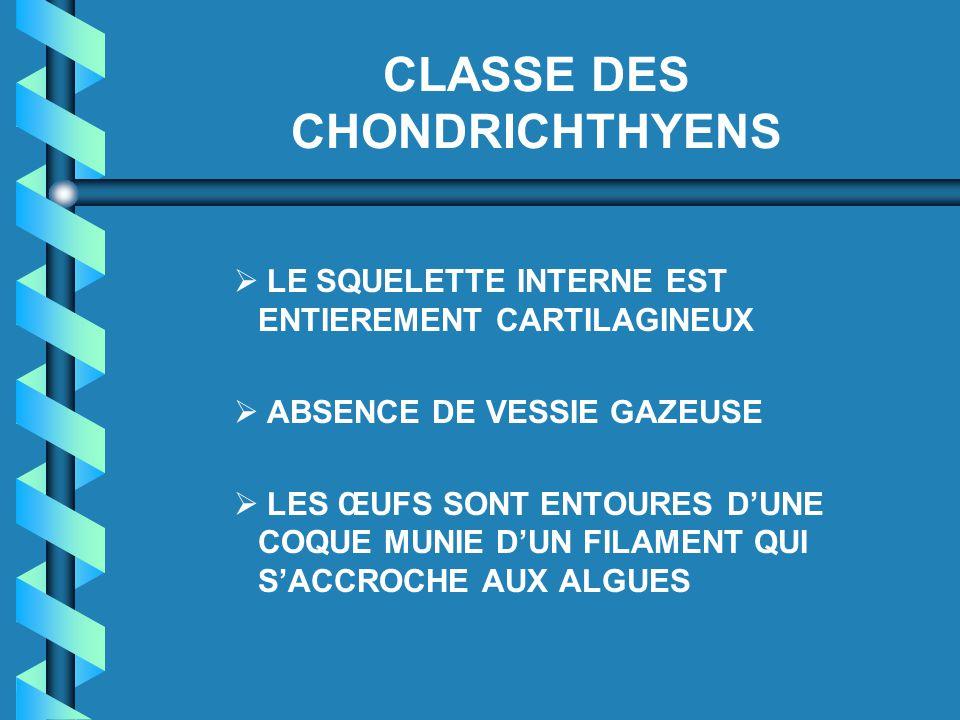 CLASSE DES CHONDRICHTHYENS