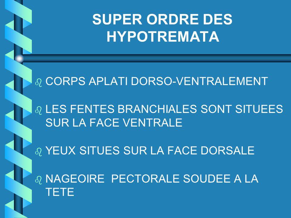 SUPER ORDRE DES HYPOTREMATA