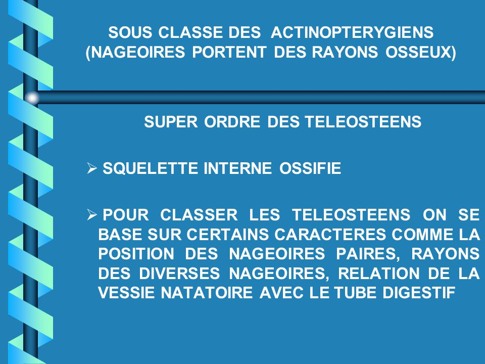 SOUS CLASSE DES ACTINOPTERYGIENS (NAGEOIRES PORTENT DES RAYONS OSSEUX)