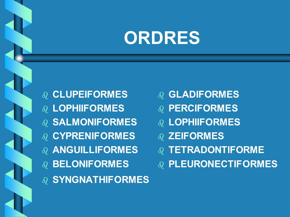 ORDRES CLUPEIFORMES LOPHIIFORMES SALMONIFORMES CYPRENIFORMES